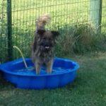 Kutya wellness. Nem csak a gazdiknak jár a wellness! Kutya wellness, pancsoló, árnyas kertek és ligetek kutyájának.