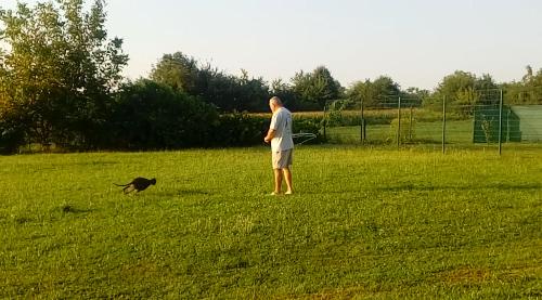 Kutyakiképzés a somogyaszalói kutyapanzióban