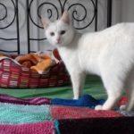 Meglepett macska a Tarka-Falka Cicapanzióban Somogyaszalón
