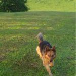 Kutyafuttató: tarka-falka kutyapanzió